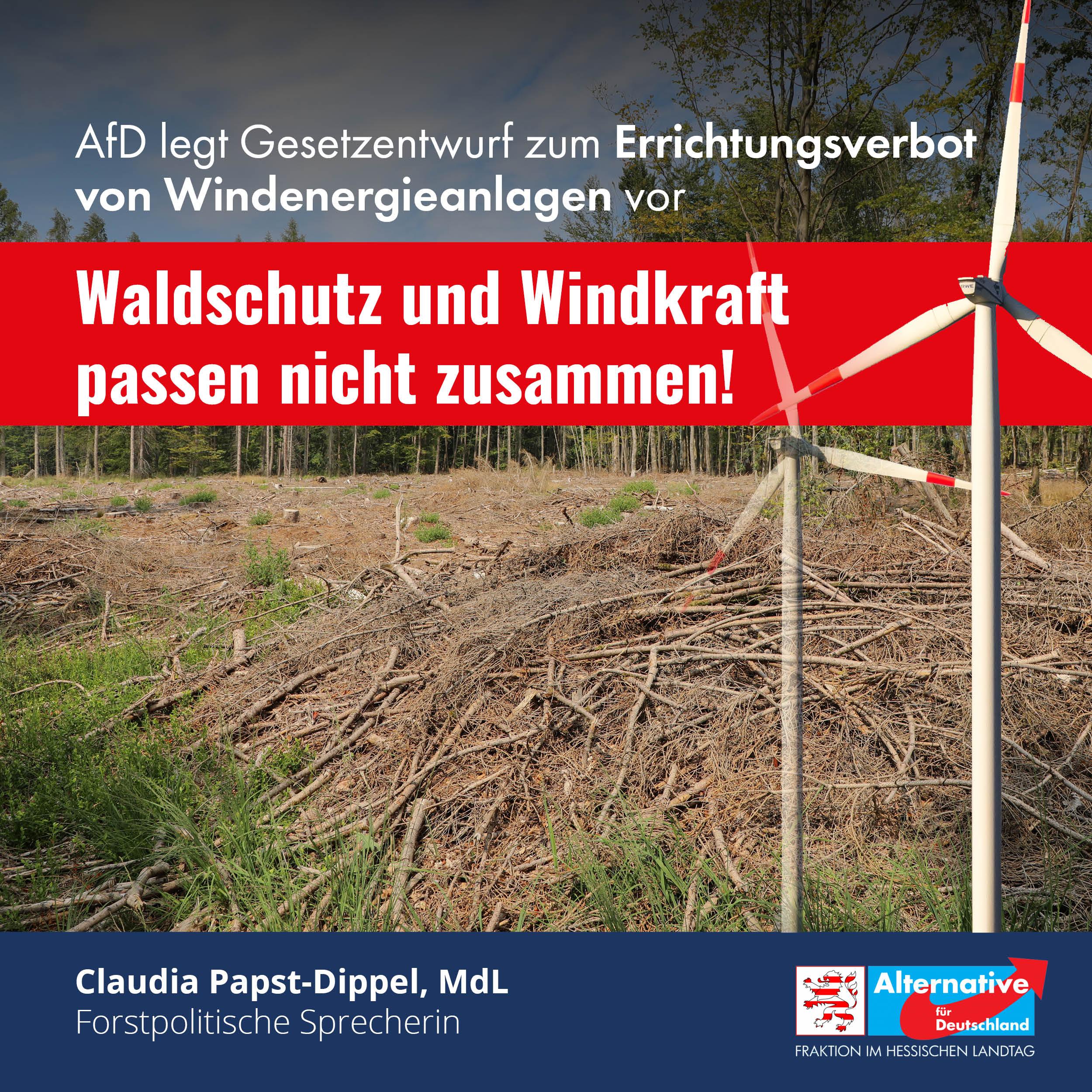 """You are currently viewing """"Waldschutz und Windkraft passen nicht zusammen"""""""