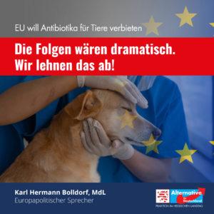 Read more about the article EU will Antibiotika für Tiere verbieten – Die Folgen wären dramatisch. Wir lehnen das ab!
